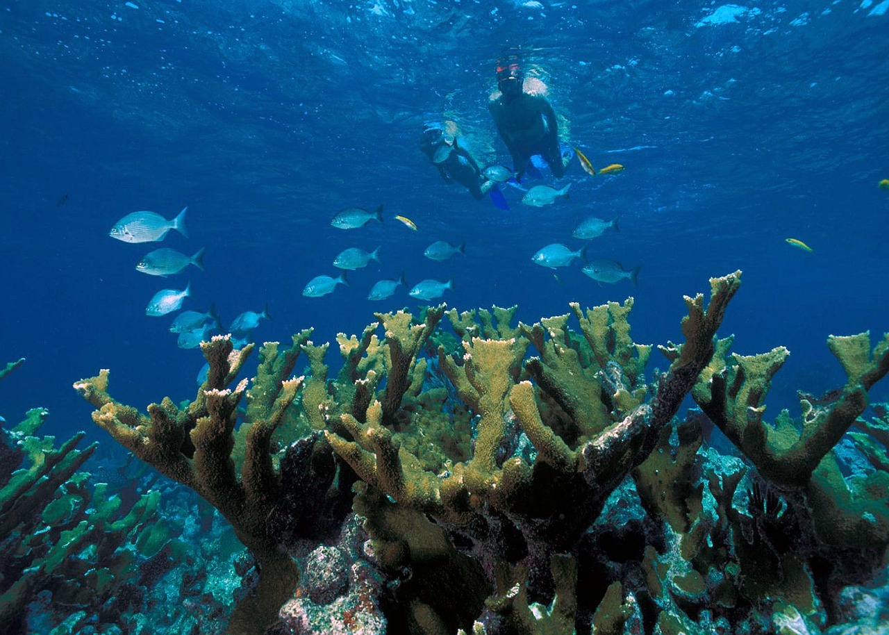 Can we Save the Elkhorn Coral?